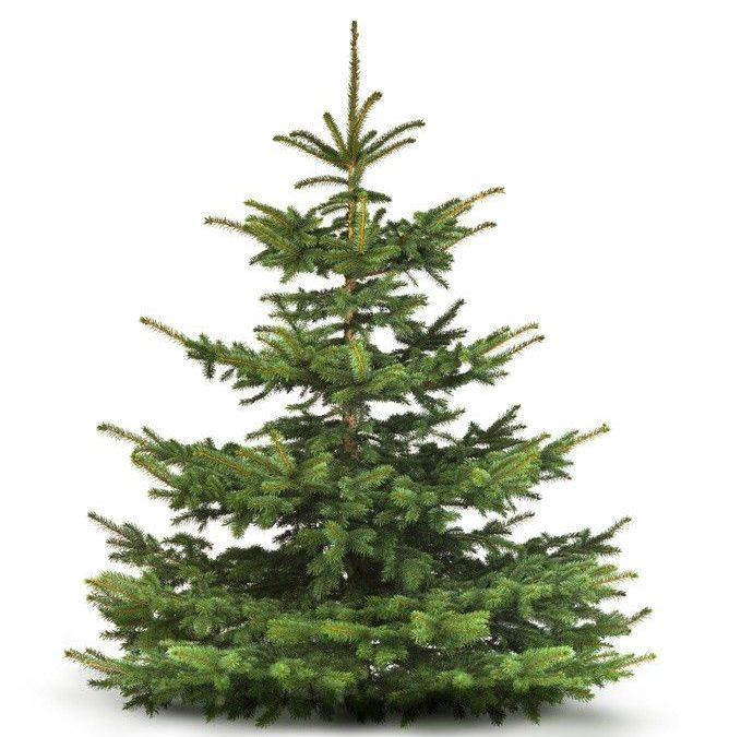 Weihnachtsbaumverkauf am Herrsteiner Dorfladen zugunsten der Jugendfeuerwehr Herrstein / Niederwörresbach